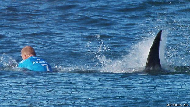150720101011_shark_attack_624x351_afpphotowsl