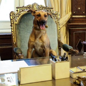 macri-cachorro
