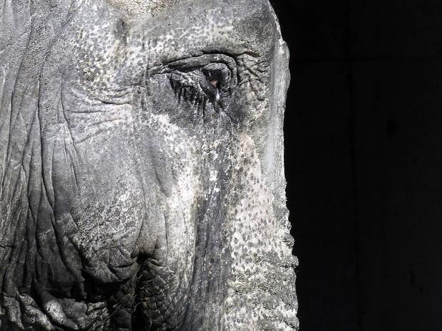 elefante-cara